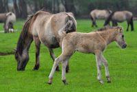Het vinden van een naam voor een paard merrie - dus slaagt's