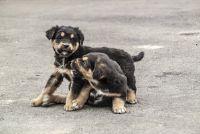 Kosten voor een gemengd ras puppy - Tips voor het kopen