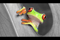 Zwart-wit foto's met kleur - met GIMP werkt het zo