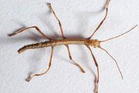 Houd stok insecten humane - Instructies