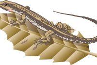 Lizards Plage - Tips