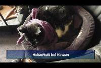 Heesheid bij katten - zodat u de symptomen