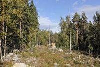 Landschappen in Zweden - kenmerken en klimaat