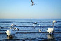 """""""Waar is de Baltische Zee?""""  - Handig om de Duitse binnenzee"""