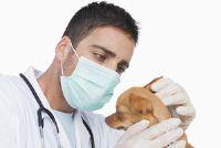 Handhaaf honden oren goed - een gids