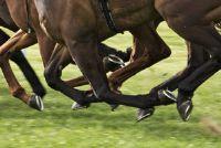 Paard heeft een gebroken been - therapieën en prognoses