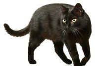 Vacht van de kat is saai - wat te doen?