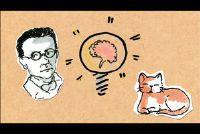 Kat van Schrödinger eenvoudig uitgelegd