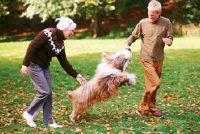 Hond voor oudere vrouw - opmerkelijk