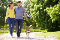 Regels in de hond lopen - nuttige informatie voor hondenbezitters