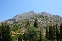 Griekse verbena - Ontdek meer