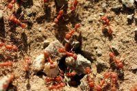 Leaky gazon door mieren Plage - Hoe op te treden tegen het ongedierte