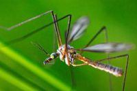 Huis remedie voor muggen