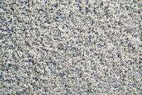 Vlooien in het tapijt - wat te doen?