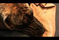 Constipatie bij honden - dus helpen uw hond