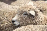 Van Lana wol breien een trui - Om de wol te verwerken