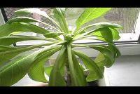 Handhaving van de Hawaiian Palm goed - hoe het werkt