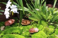 Moss is goed voor de planten?