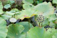 Waterplanten voor Minivijver selecteren - het moet je betalen