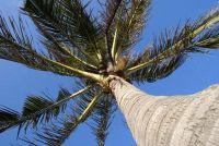 Palm IJsland Dubai - interessante informatie over het eiland