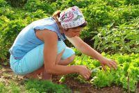 Groenteteelt in je eigen tuin - die u moet overwegen wanneer een moestuin