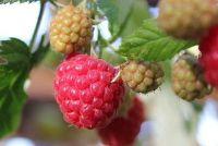 Root product of container planten - zodat u de juiste beslissing te nemen