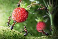 Geplast van mieren - deze huismiddeltjes helpen tegen de jeuk