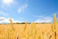 Build zonne absorber zelf - hoe het werkt