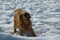 Onzichtbare hond hek - voors en tegens