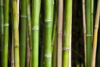 Bamboo patch - Informatieve