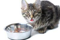 Sporen en te behandelen maagproblemen bij katten - hoe het werkt