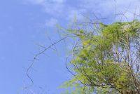 Asperges hardy - zodat u de asparagussnijgroen goed overwinteren