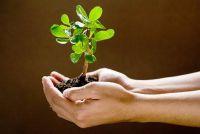 Vermijd wateroverlast - dus schonk balkon planten goed