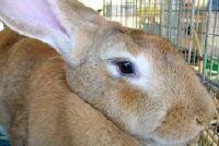 Ondersteuning merken zonder wreedheid tegen dieren - dierproeven in cosmetica