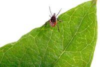 De ziekte van Lyme - herkennen de symptomen goed