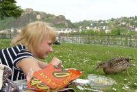 Bereiden van voedsel voor een picknick - recepten die zelfs kinderen de smaak