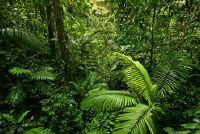 Seizoensinvloeden natte tropen - verklaring