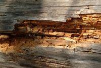 Combat houtworm zonder gif - hoe het werkt