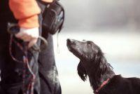 Merit als een hond trainer - weten over functiebeschrijving en winstpotentieel