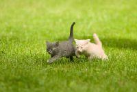 Hoe snel kan een kat lopen?  - Stubentiger info