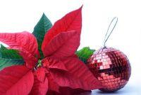 Het verfraaien van bloemen voor Kerstmis - zo zie je eigen planten uit feestelijke
