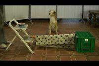 Honden spelen in het huis - zodat u in dienst van uw hond nuttig