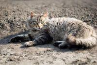Hulp aan de kat uitwerpselen - dus uw tuin schoon blijft