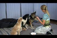 Employ hond pak samen - hoe het werkt