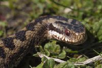 German slangen - Meer