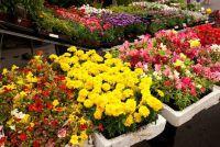 Trend kleur geel in de tuin - zo maak je bloembedden