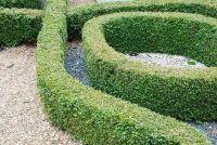 Buxus heeft gele bladeren - oorzaken & Maatregelen