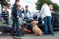Hond veroorzaakt auto-ongeluk - een goed verloop van de partijen