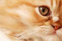 Katten krijgen zindelijk - Hoe om uw kat te leren