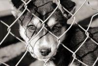 Doe iets voor het welzijn van dieren - 10 Ideeën